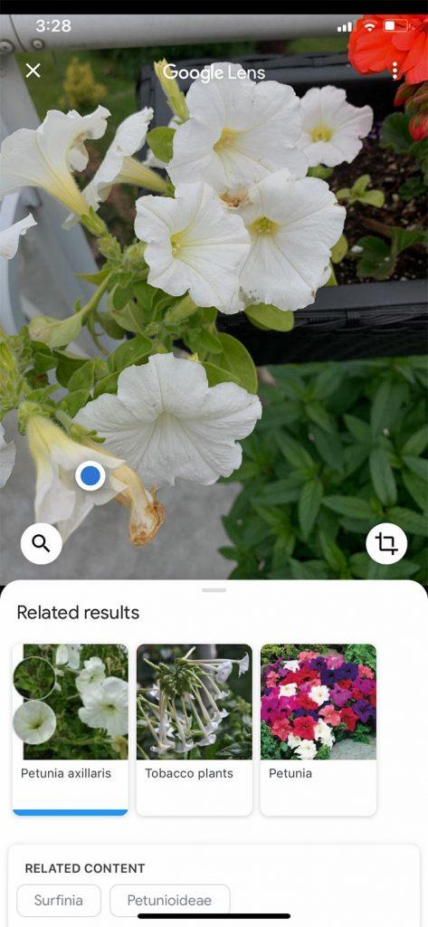 Google Lens - 2