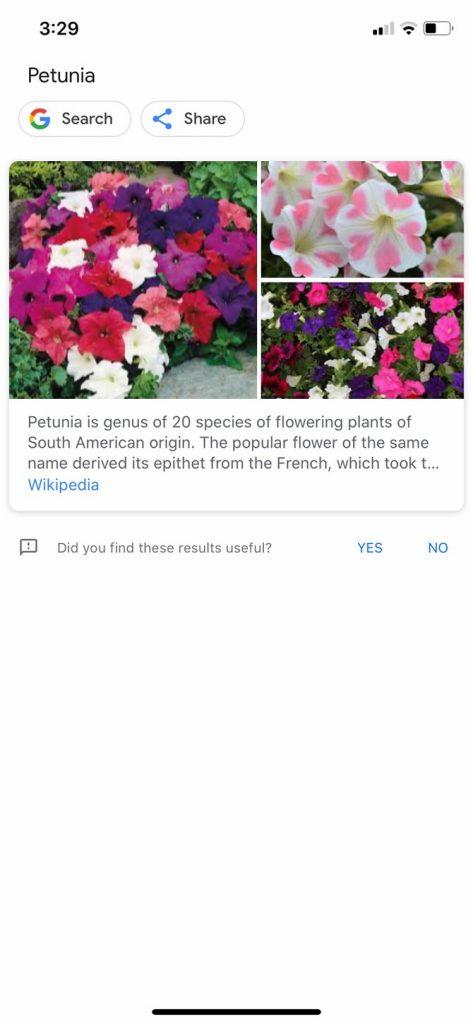 Google Lens - 3