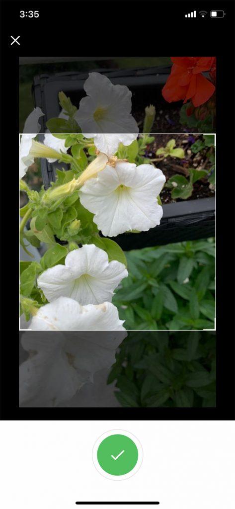 Plant Identification ++ 2