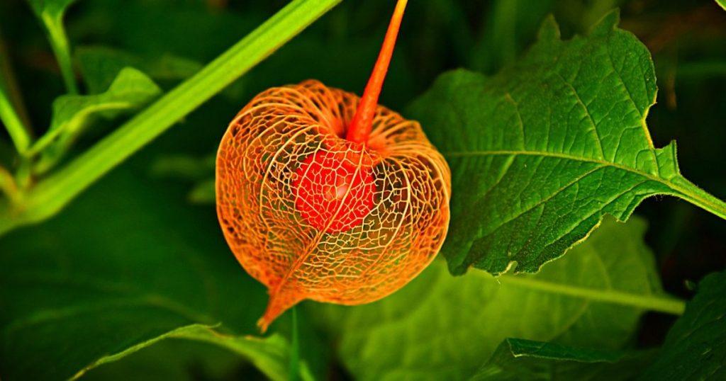 Identifikujte vrste biljaka uz pomoć aplikacije i kamere telefona